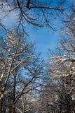 Cima d'albero nel winterscape Immagini Stock