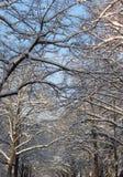 Cima d'albero nel winterscape Immagini Stock Libere da Diritti