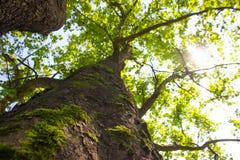cima d'albero verde fotografia stock libera da diritti