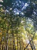 Cima degli alberi della foresta in autunno in anticipo immagini stock libere da diritti