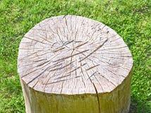 Cima del ceppo sull'erba falciata Fotografie Stock Libere da Diritti
