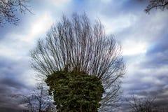 Cima dell'albero con le foglie verdi immagine stock