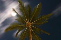 Cima dell'albero del cocco alla vista di notte dal fondo Fotografie Stock Libere da Diritti