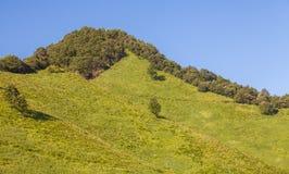 Cima dell'alta montagna e del campo verde Fotografia Stock