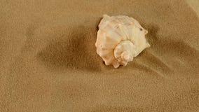 Cima della conchiglia marina usuale sulla sabbia, rotazione video d archivio