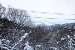Cima della foresta nell'inverno Fotografie Stock Libere da Diritti