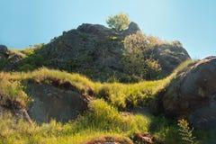 Cima della montagna con un albero nel mezzo Fotografie Stock Libere da Diritti