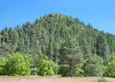 Cima della montagna della foresta di Sedona Arizona Immagine Stock