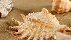 Cima delle stelle marine differenti dello shellsand del mare sulla spiaggia video d archivio