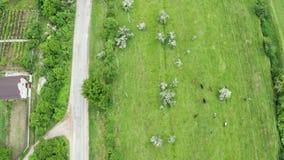 Cima giù il colpo aereo della strada rurale con la guida di veicoli su  archivi video