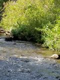 Cimarron Canyon Royalty Free Stock Image