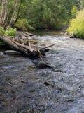 Cimarron Canyon Royalty Free Stock Photo