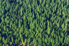 Cime d'albero Immagini Stock Libere da Diritti
