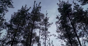 Cime d'albero che si muovono con il vento