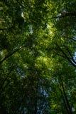 Cime d'albero da sotto alla luce solare, Velbert immagine stock