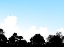 Cime d'albero del terreno boscoso Immagine Stock Libera da Diritti