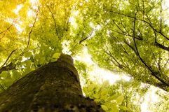 Cime d'albero della foresta Fotografia Stock