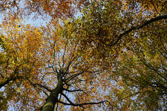 cime d'albero di autunno fotografia stock