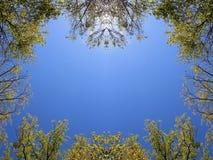 Cime d'albero di caduta del canyon del corniolo Fotografia Stock