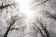 Cime d'albero di inverno Fotografia Stock