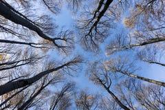 Cime d'albero e circuiti di collegamento immagine stock