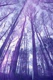 Cime d'albero e circuiti di collegamento fotografia stock libera da diritti