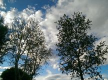 Cime d'albero e nuvole Fotografie Stock