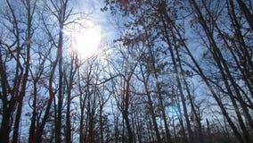 Cime d'albero e sole Fotografia Stock