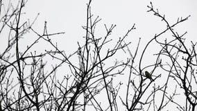 Cime d'albero e un uccello stock footage