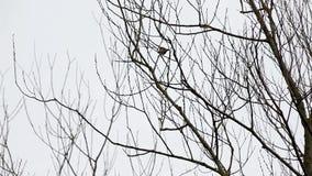Cime d'albero e un uccello video d archivio