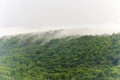 Cime d'albero nebbiose Immagini Stock Libere da Diritti