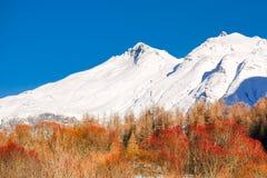 Cime d'albero rosse davanti alle montagne nevose fotografia stock