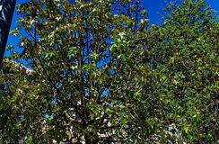 Cime d'albero in una città fotografia stock