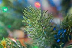 Cime d'arbre de pin 2778 (aériens) Image libre de droits