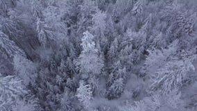 Cime degli alberi in neve archivi video