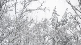 Cime degli alberi in una foresta mista che ondeggia delicatamente dentro stock footage