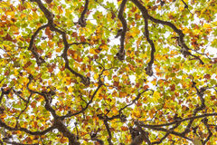 Cime dell'albero Fotografia Stock Libera da Diritti
