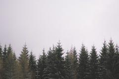 Cime dell'albero immagini stock
