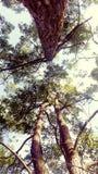 Cime dell'albero Fotografie Stock