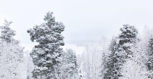 Cime dell'albero di Snowy contro il cielo grigio Immagini Stock Libere da Diritti
