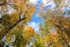 Cime dell'albero nel fogliame di autunno Immagine Stock