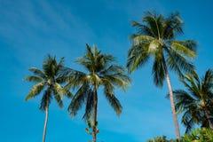 Cime delle palme contro il cielo blu Immagine Stock Libera da Diritti