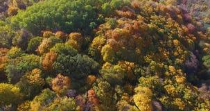 Cime multicolori dell'albero e la cittadina di aspetto dietro la foresta sull'orizzonte video d archivio