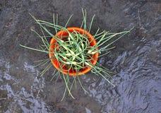 Cime verdi di aglio su una ciotola Immagine Stock