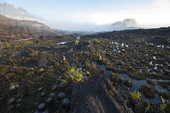 Cimeira da montagem Roraima, mundo estranho feito do st vulcânico do preto Fotografia de Stock