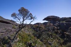 Cimeira da montagem Roraima, mundo feito do st vulcânico estranho do preto Foto de Stock Royalty Free