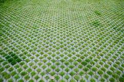 Ciment de passage couvert, modèle d'herbe pour la maison Photos stock