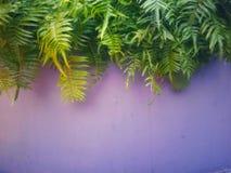Cimente paredes e áreas verdes, com duas interseções, imagem de stock