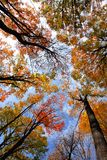Cimes d'arbre Image stock
