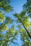 Cimes d'arbre Images stock